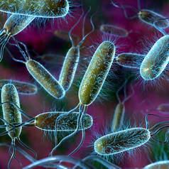 Штамм бактерий Escherichia coli, используемый для получения колибактерина