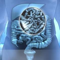 Разделы: Пробиотики в терапии заболеваний ЖКТ. Основные принципы терапии дисбактериоза в условиях санаторно курортного лечения. Список литературы