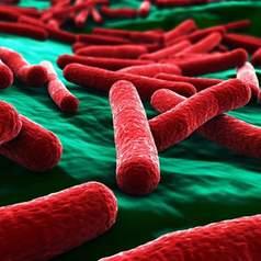 Кишечная палочка (Escherichia coli)
