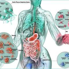 Нормальная микрофлора и ее роль в поддержании здоровья человека