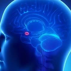 В мозге найден центр азарта