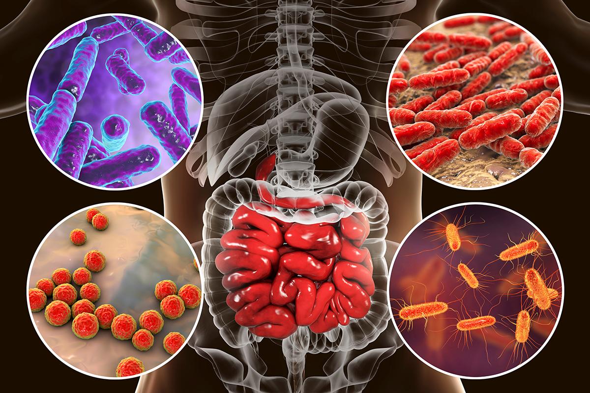 Кишечные бактерии способны указать на возраст человека