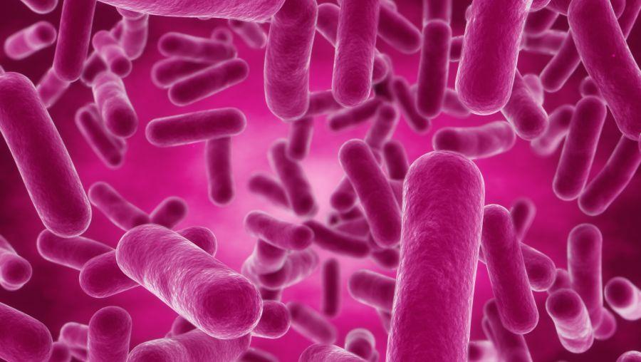 """Штамм бактерий Bacillus subtilis, несущий свойство антибиотикорезистентности, используемый для получения препарата """"Бактиспорин"""""""