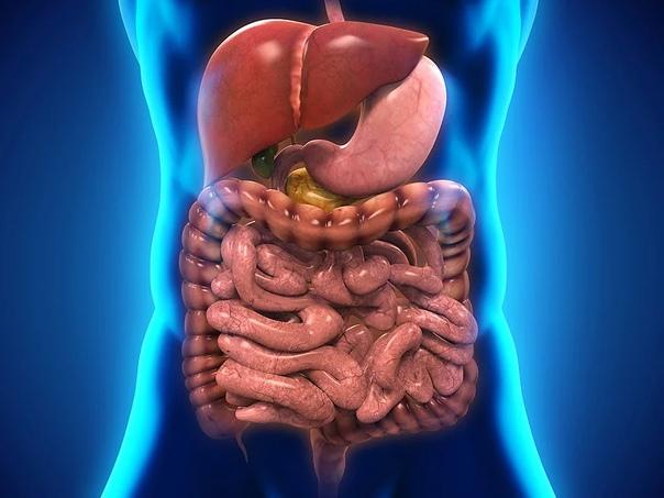 Что скрывается за дисбактериозом? Избыточный бактериальный рост в кишечнике: клиническое значение и вопросы терапии