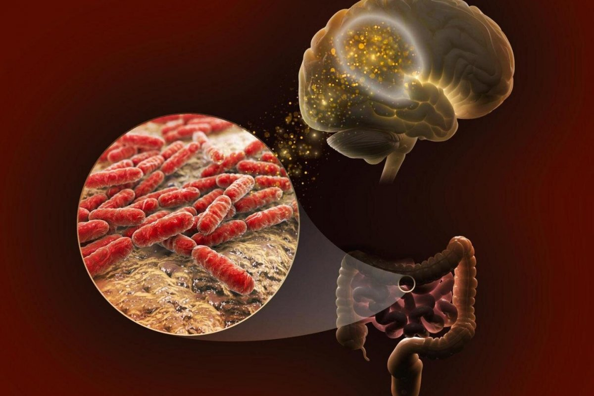 Микробиоценоз кишечника и иммунитет