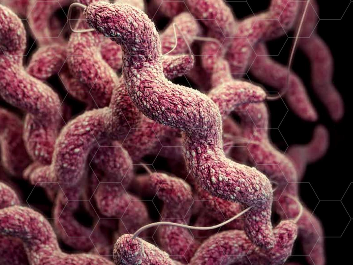 Взаимосвязь микробиоценоза кишечника и характера течения кампилобактериоза у детей