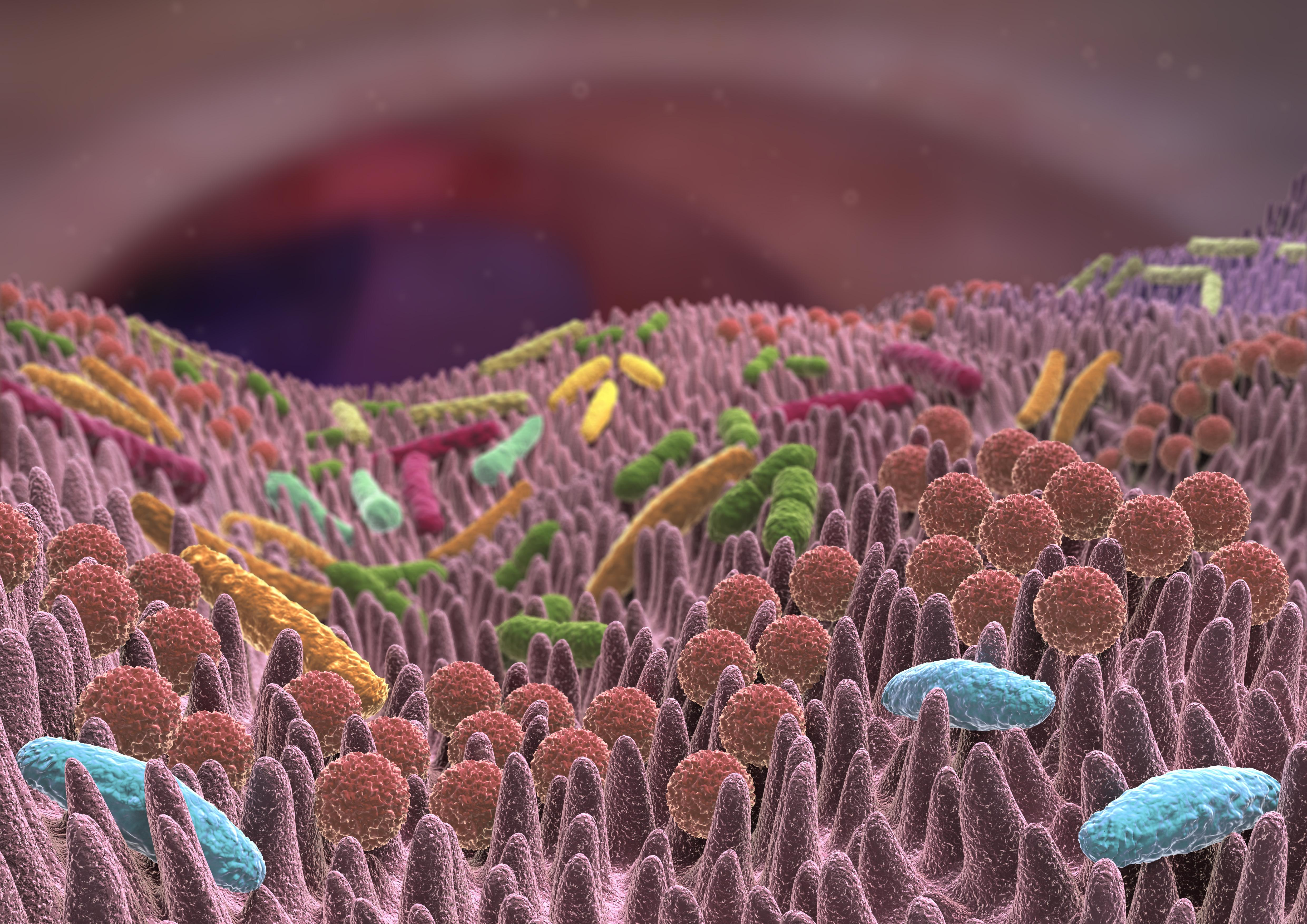 Гистобактериоскопический и бактериологический методы исследования колонобиоптатов и характеристика пристеночной микрофлоры, как показатель биоценоза толстой кишки
