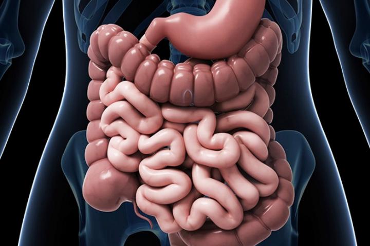 Нормальная микрофлора кишечника и дисбактериоз