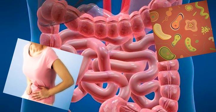 Клинические особенности различных форм дисбактериозов