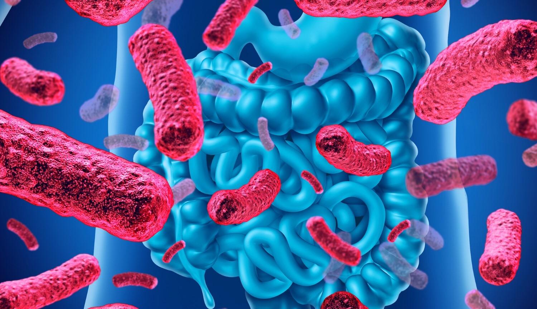 Микробиоценозы человека и функциональное питание. Часть 2