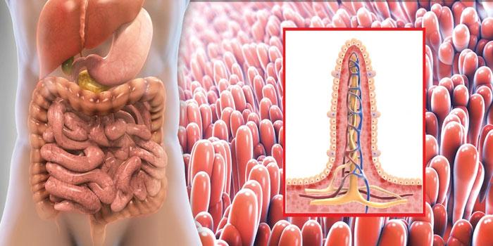 Нарушение нормального состава кишечного биоценоза и методы его коррекции
